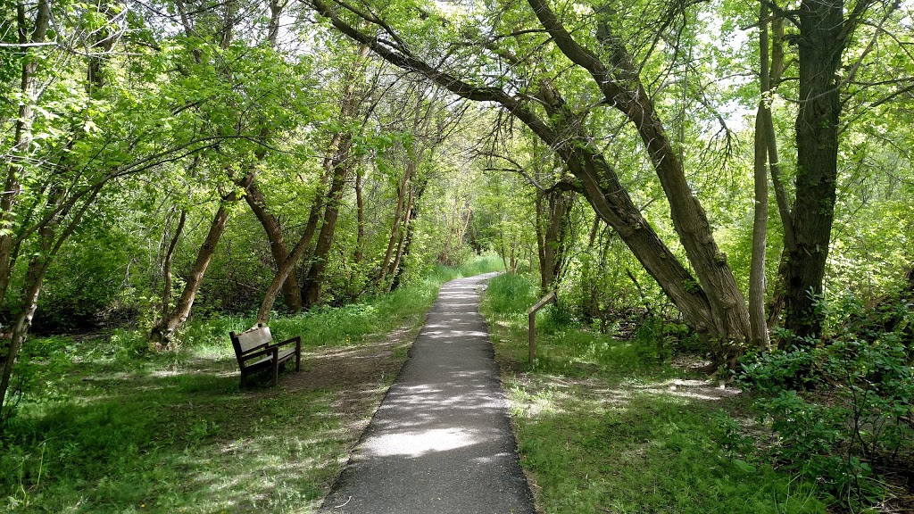 Trail at Cherry Springs Nature Area