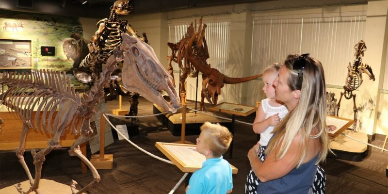 image: family looking at dinosuar bones