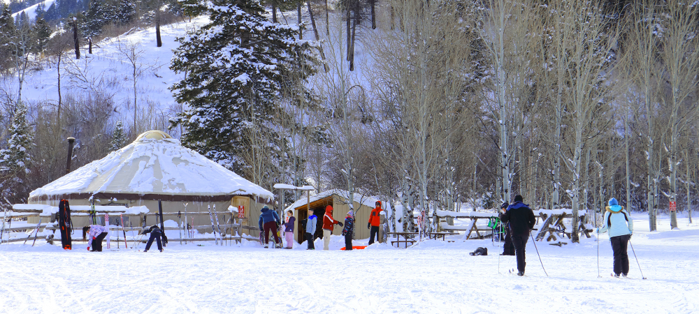 image: x country skiers